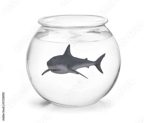 fishbowl with shark inside