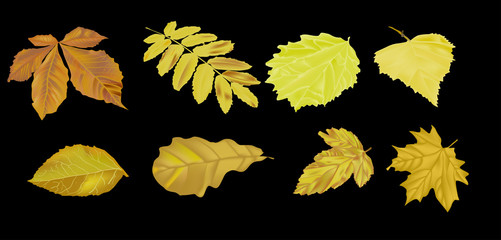 set of golden leaves isolated on black