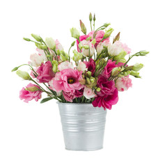 Pink eustoma flowers in  pot