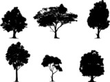 Fototapety Vector illustration of tree silhouettes