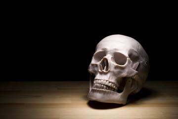 頭蓋骨の人体模型