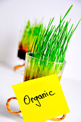 organic wheatgrass in a bowl