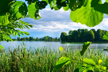 Green vegetation on lake