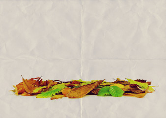 dry leaves paper