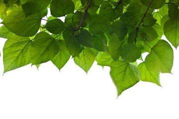 Blätter und Himmel