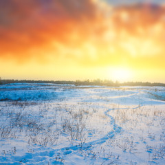 winter sunset over a steppe