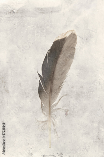 bird feather vintage background