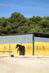 Cuadra amarilla con caballo negro