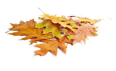 heap of yellow autumn leaves on white background