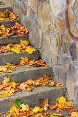 steps on a town square covered with foliage