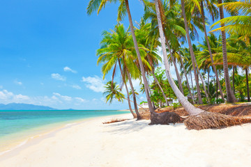 tropical beach with coconut palm
