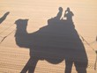 shadow camel
