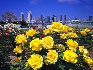 Rose Garden Cetennial Park Coronado San Diego