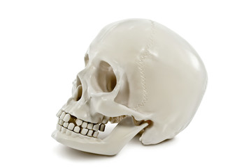The human skull isolated on white background.