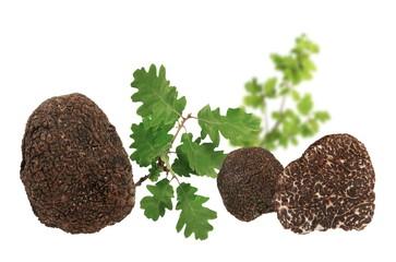 Truffe et feuilles de chêne