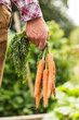 Man holding bunch of organic carrots close up
