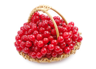 Sweet viburnum berry