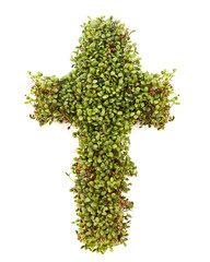 Cross of Sprouts