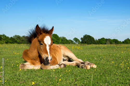 Brown Horse Foal
