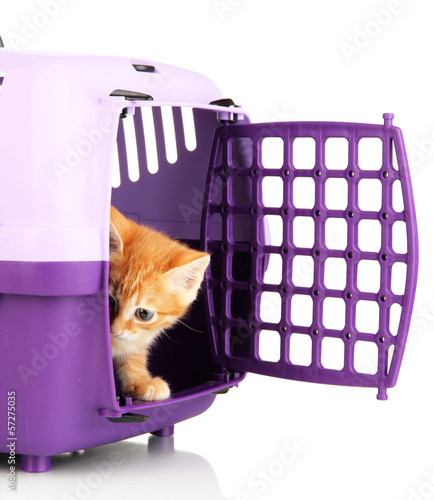 Fotobehang Dragen Cute little red kitten with travel plastic cage isolated
