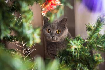 cristmas cat