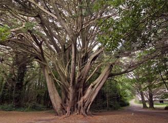 forest, Killarney National Park - ireland