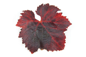 leaves Grape
