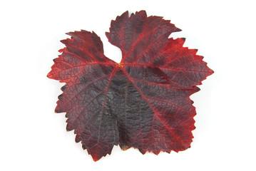 leaves Grape
