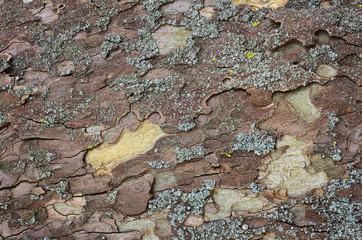 texture di corteccia