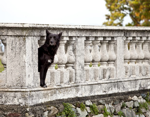 Dog guarding castle property