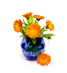 Calendula flowers in a  glass vase  on a white background