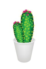 Two Cactus Plant in A Flower Pot