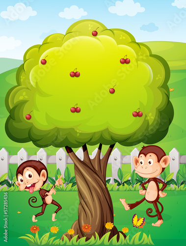 Two monkeys playing under the tree