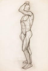 human body anatomy study