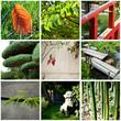composition jardin japonais