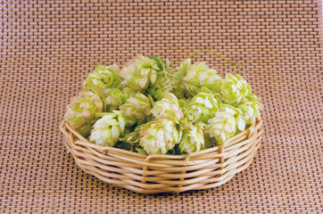 hop cones in wooden plate