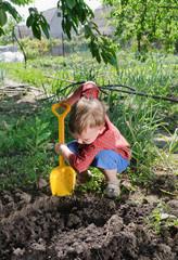 Little boy planting vegetables