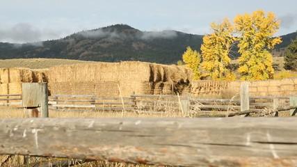 Stacks of Hay in Autumn, Merritt BC.