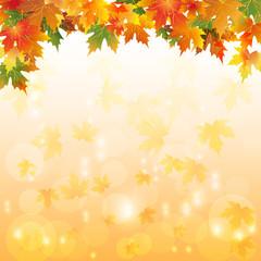 Осенние листья с каплями воды и разноцветным оранжевым фоном