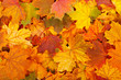 canvas print picture - Autumn leaves
