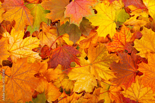 Leinwanddruck Bild Autumn leaves