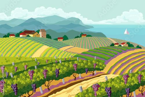 Fotobehang Boerderij Rural landscape with vineyard