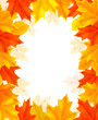 Autumn background with colorful leaves. Vector