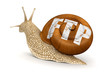 Snail and FTP (clipping path included)