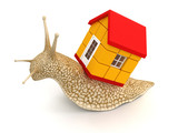 Snail with house (clipping path included)