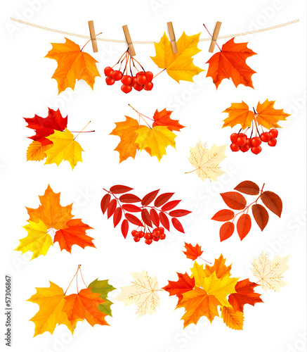 Autumn background with colorful leaves. Design elements. Vector