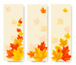 Three autumn banners with colorful leaves. Vector illustration.