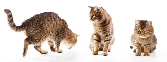 Cat's motions