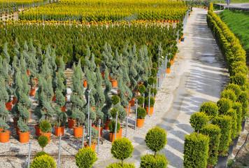 Giovani piante coltivate in vivaio