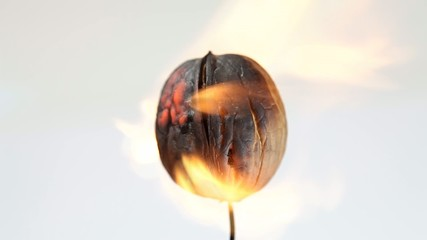 Burning walnut